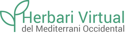 Logotipus de l'Herbari Virtual del Mediterrani Occidental